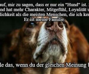 animals, dog, and german image