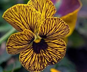 amazing, black, and flower image