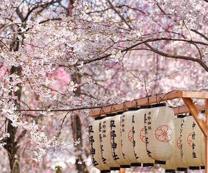 japan, flowers, and spring image