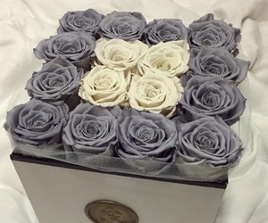 roses, flowers, and grey image