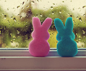 cute, rain, and bunny image
