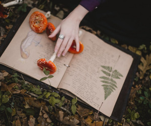 book, witch, and herb image