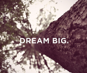 Dream, tree, and quote image
