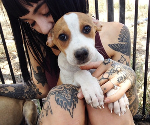 tattoo, dog, and hannah snowdon image