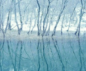 blue, forest, and cold image