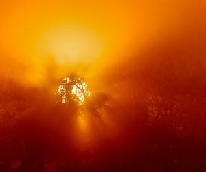 orange, sunset, and d. landry image
