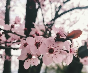 blooming, brown, and nature image