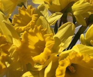 yellow, beautiful, and green image