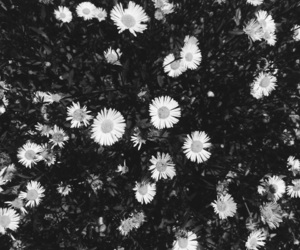 black and white, flowers, and tumblr image