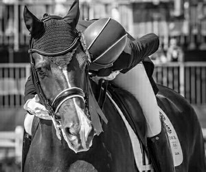 horse, dressage, and photography image