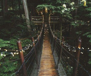 nature, bridge, and travel image