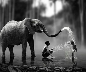 elephant, black and white, and kids image