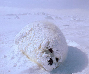 cute, seal, and snow image