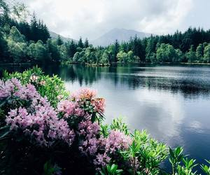 flowers, lake, and green image