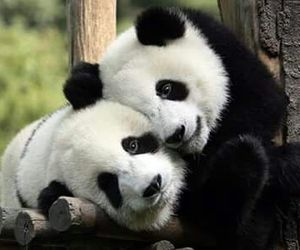 animals, cute, and love image