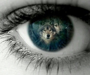 eye and wolves image