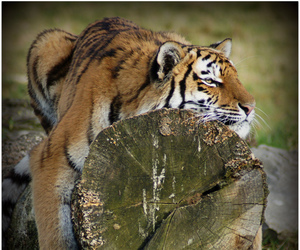 friday, sony, and tigre image
