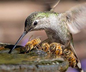 animal, bees, and bird image