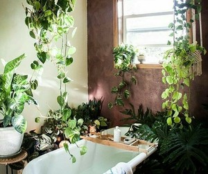 plants, bath, and interior image