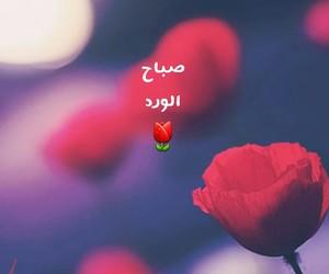 arabic and صباح+الورد+ image