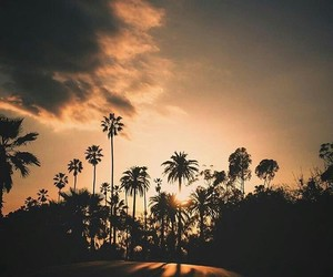 palms, sunset, and not my photo image
