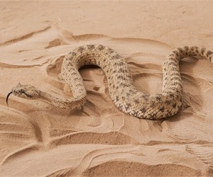 rattlesnake, got, and game of thrones image