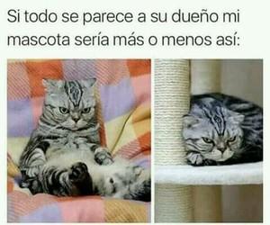 Gatos, memes, and nekos image
