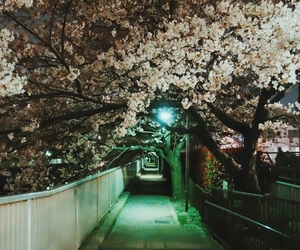 alleyway, cherry blossoms, and japan image