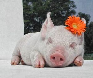 pig, cute, and flower image