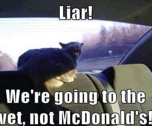 cat, funny, and liar image