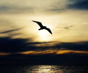 bird, silhouette, and nature image