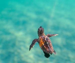 animal, ocean, and deep image