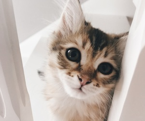 animal, pretty, and cute image