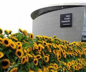museum, flowers, and art image