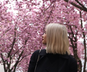 blonde, cherryblossom, and Dream image