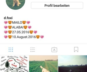 animal, follower, and insta image