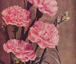 art, carnations, and flowers image