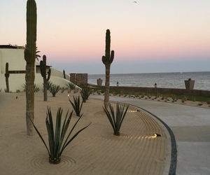 beach, cactus, and summer image