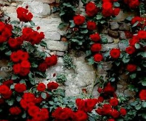 flor, red, and travel image