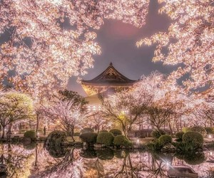 japan, blossom, and nature image