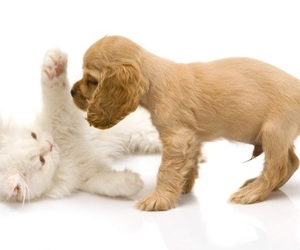 puppy, animal, and cat image