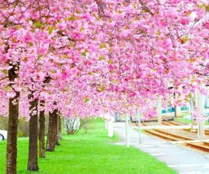 flowers, pink blossoms, and spring image