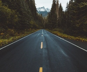 forest, road, and tumblr image