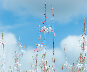 clouds, flower, and flowers image