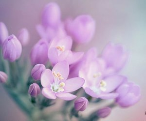 flowers, pastel, and spring image