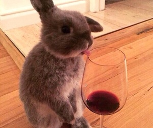 animal, rabbit, and wine image
