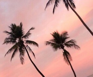 wallpaper, palm, and tumblr image