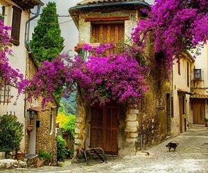 france and flowers image