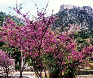 flowers, nafplion, and love image