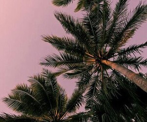 palm, tumblr, and wallpaper image